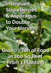 Interplant Strawberries & Asparagus to Double Your Harvest