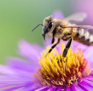 Attract the Birds and the Bees to Your Garden to Create a Thriving Eco-System