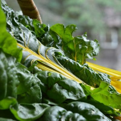 Growing Swiss Chard for Fast Reliable Harvests All Season Long