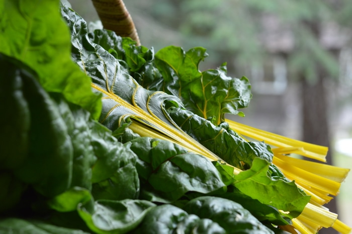 Growing Swiss Chard For Fast Reliable Harvests All Season Long Joybilee Farm Diy Herbs Gardening