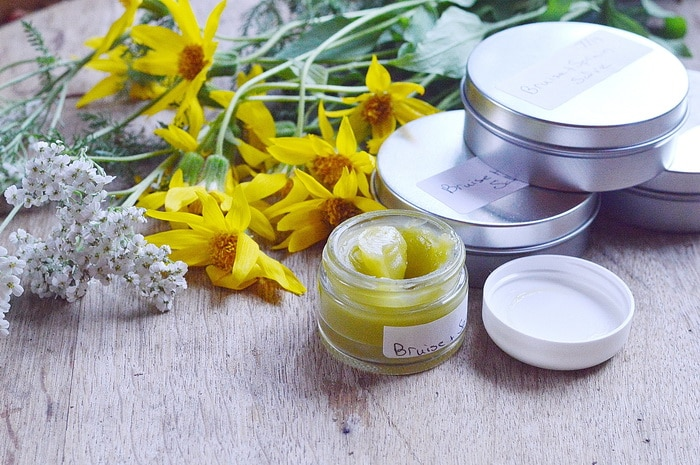 yarrow and arnica flowers with a jar of bruise cream