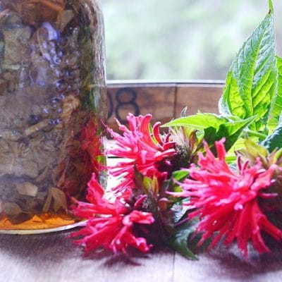 How to Make an Herbal Oxymel and Why You Should