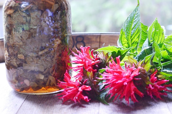 Jar of monarda infused vinegar