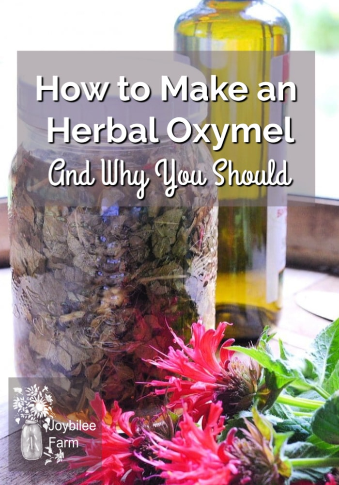 a jar of herbs and red flowers with the text overlay How To Make an Herbal Oxymel