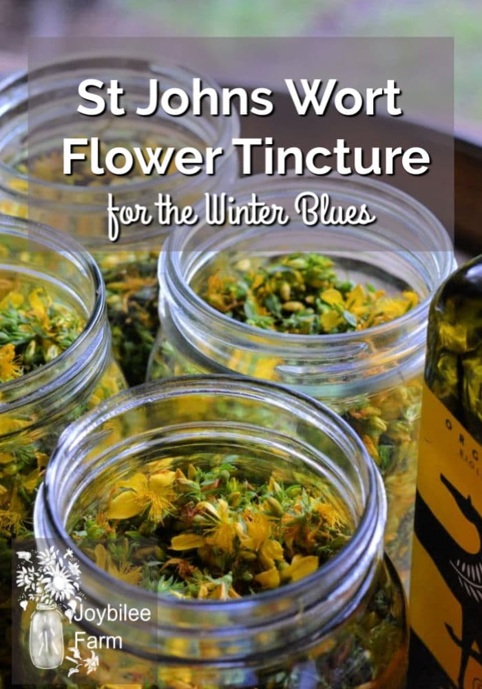 St Johns Wort Flower Tincture