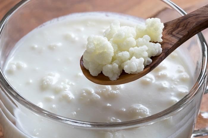 milk kefir grains in the gift guide for fermenters