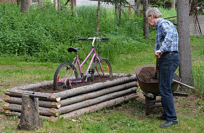 Spreading garden soil into a sweet pea planter.
