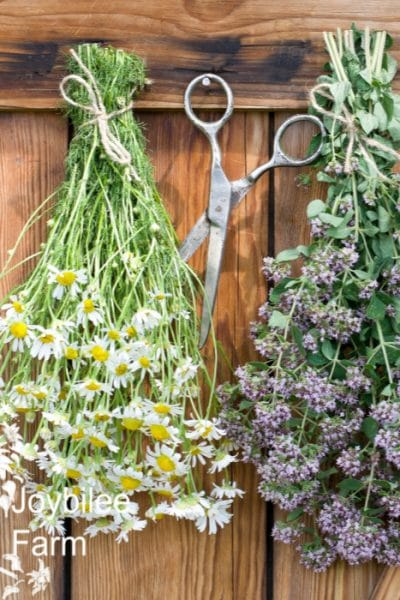 bundled herbs drying on a wooden wall