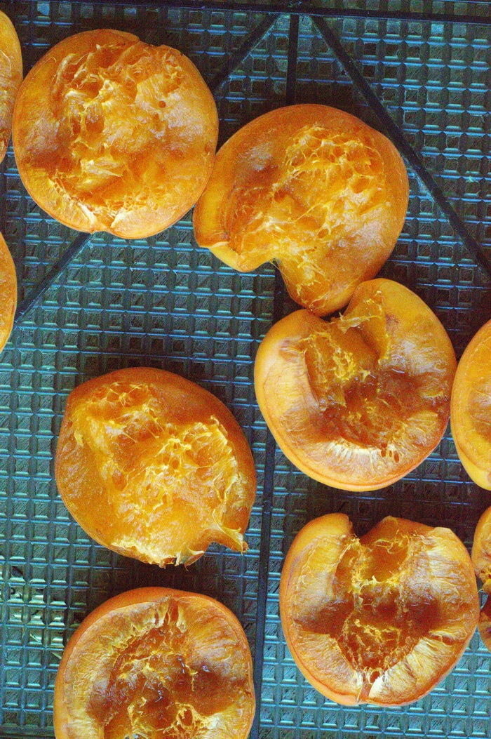 fresh apricots on a dehydrator tray