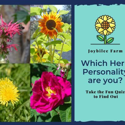 Which Herb Personality are You?
