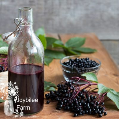A bottle of elderberry syrup on a wooden table, with fresh elderberries in the background