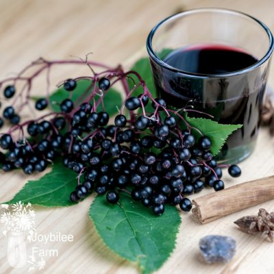 Canning Elderberry Juice Safely at Home for Cold and Flu Season