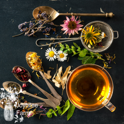 Decongestant Immune Tea