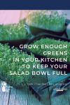 Microgreens growing in trays