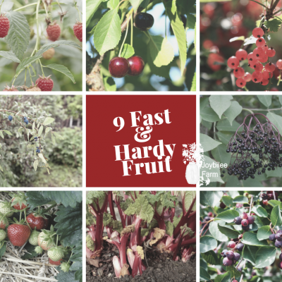 9 Quick Producing Fruit to Grow in Your Edible Garden in  Zone 3