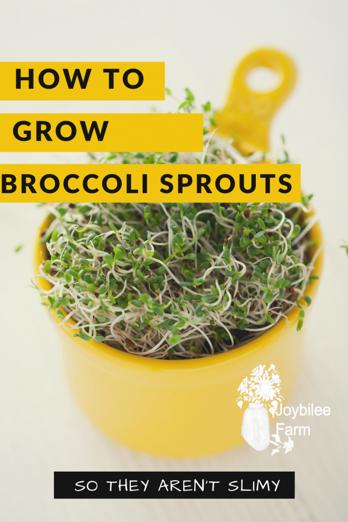 Broccoli sprouts in a yellow bowl